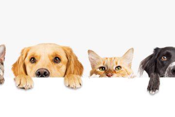 Adaptar tu casa a la llegada de una mascota