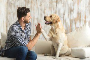 Adaptar tu casa a la llegada de una mascota para facilitarle la vida