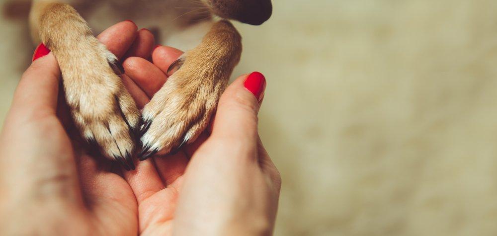 Adaptar tu casa a la llegada de una mascota para vivir mejor