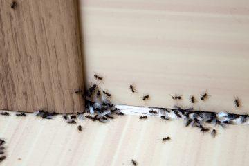 Insectos en casa